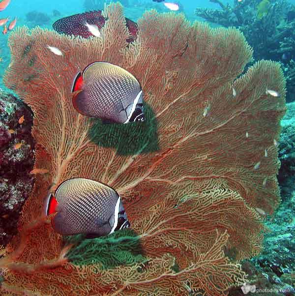 Любительское фото подводного мира